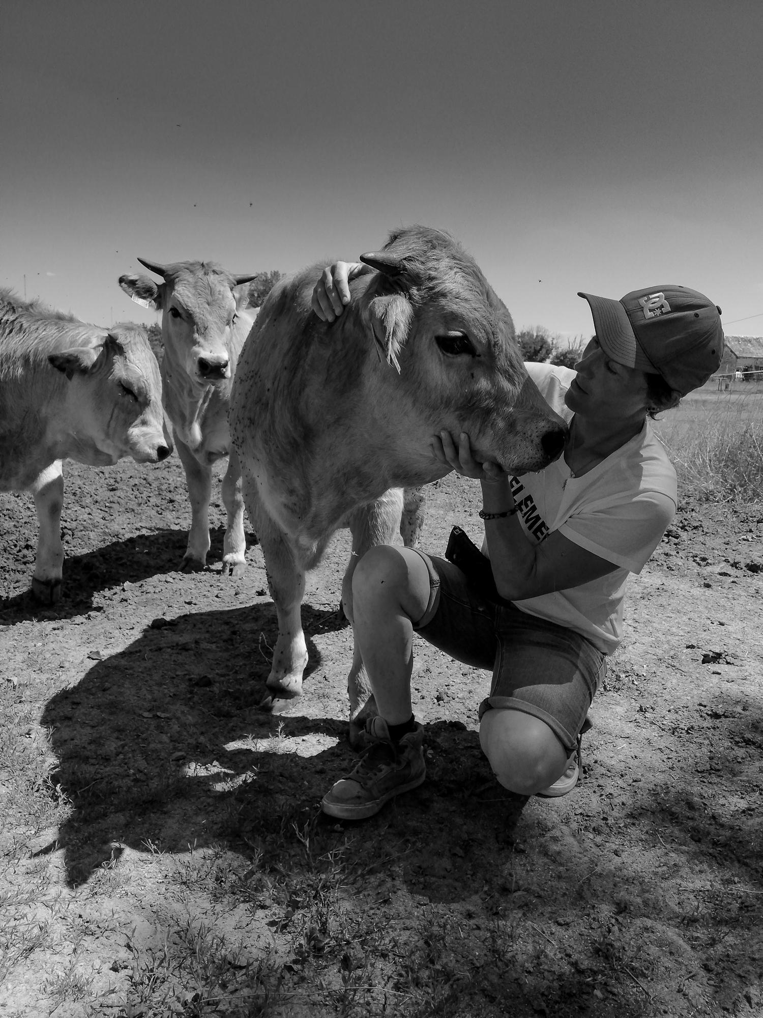 Alex et sa vache