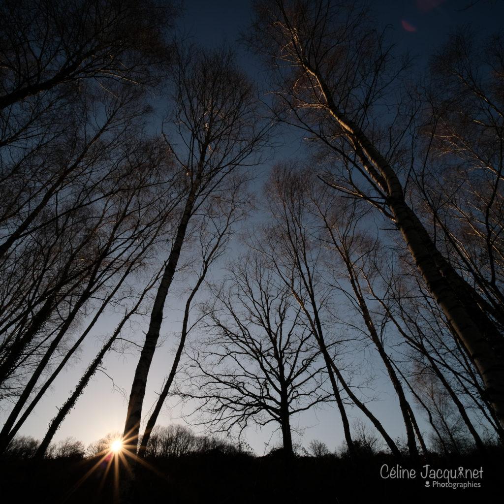 Silhouette d'un jeune chêne encadré de boulot